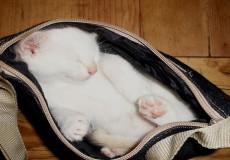 cat-in-a-bag
