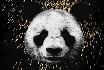 Learn English with Music [Desiigner – Panda]