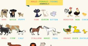 Interesting List of Animal Names for Male, Female, Young and Groups
