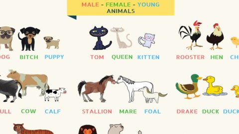 List of Animal Names for Male, Female, Young and Groups