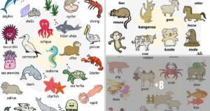 Useful Animals Vocabulary from 7ESL Teaching English