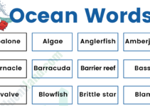 Oceans Marine Vocabulary Word List: Useful Ocean Words with Examples and Pictures