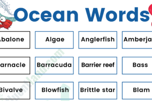 Oceans Marine Vocabulary Word List: Useful Ocean Words with Examples and Pictures 14