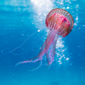 Oceans Marine Vocabulary Word List: Useful Ocean Words with Examples and Pictures 13